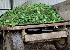17-tracteur-haricots